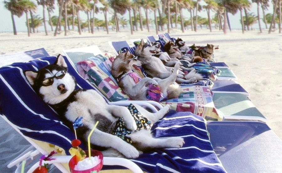 sunbathing-dogs.jpg