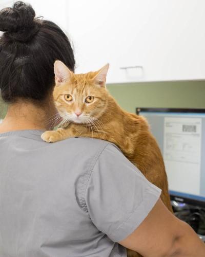 Northern Liberties Veterinary Center